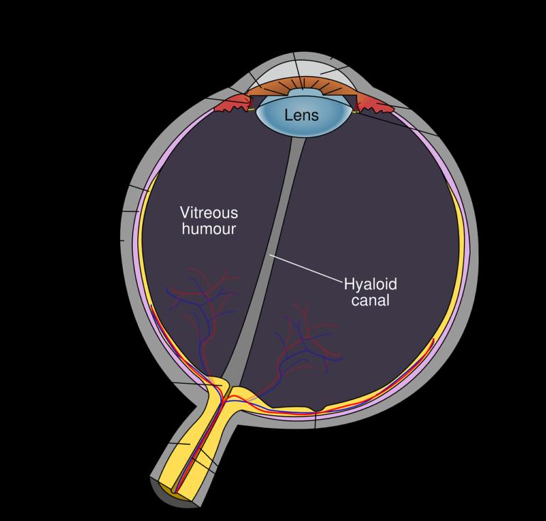 Optima Eyecare, Ocular Disease Management